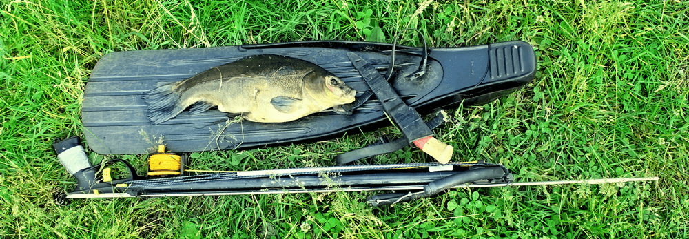 When Is Spearfishing Season? What Time Best For Spearfishing