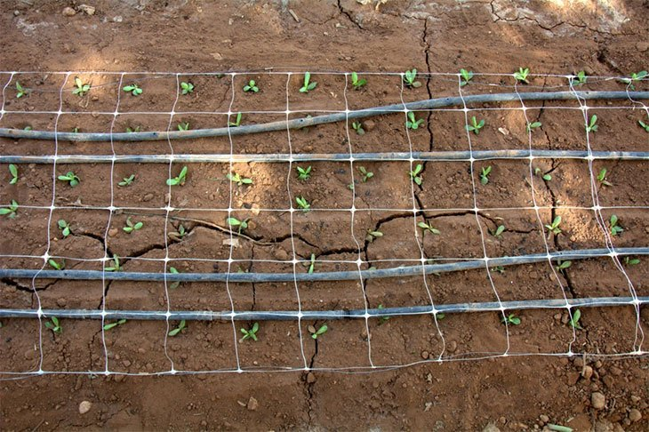 best automatic drip irrigation system
